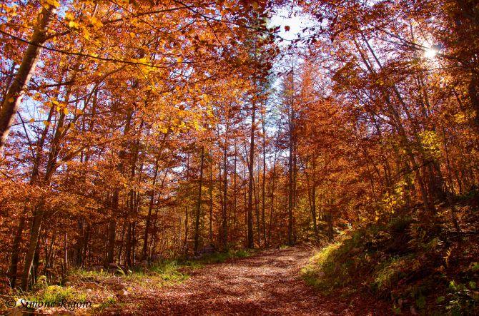 _DSC8667 I meravigliosi colori dell'autunno