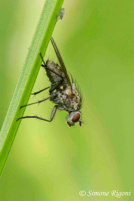 dsc_1433-mosca