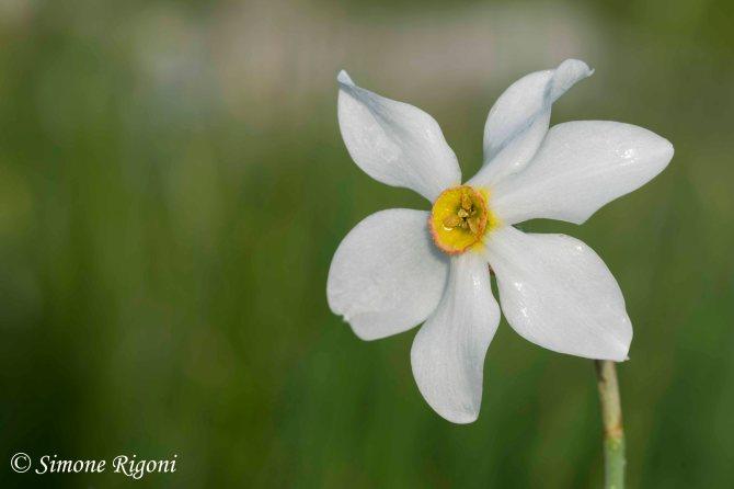 DSC_1090 Narciso